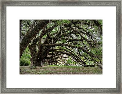 Framed Print featuring the photograph Tunnel In Charleston by Jon Glaser