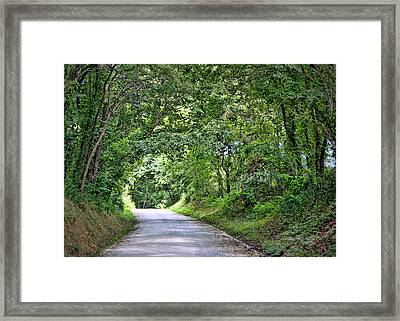 Tunnel Of Trees Framed Print by Cricket Hackmann
