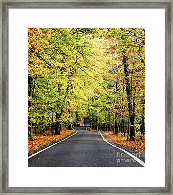Tunnel Of Trees Framed Print