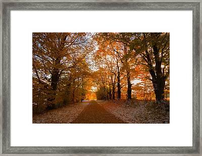 Tunnel Through Morning Backlight Framed Print