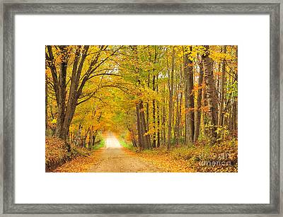 Tunneling Into Autumn Framed Print by Terri Gostola