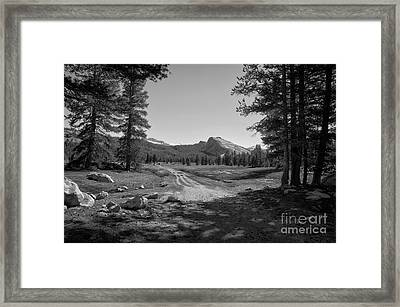 Tuolumne Trail Visit Www.angeliniphoto.com For More Framed Print