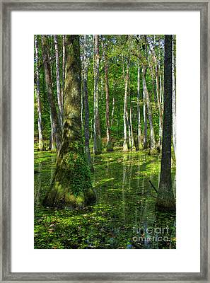 Tupelo Trees In Mississippi  Framed Print by Larry Braun