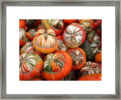 Turban Squash Framed Print