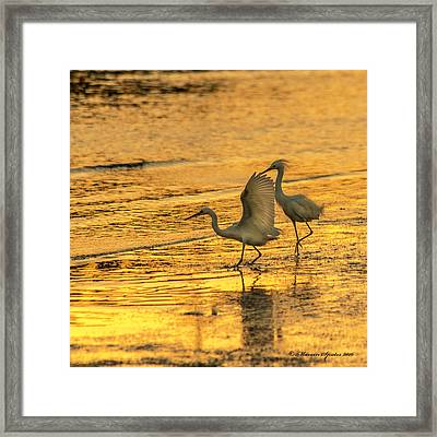 Turf War Framed Print by Marvin Spates