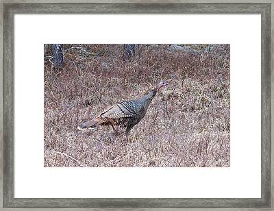 Framed Print featuring the photograph Turkey 1155 by Michael Peychich