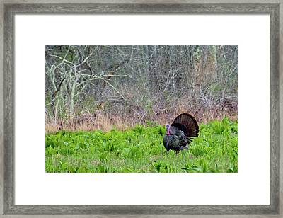 Framed Print featuring the photograph Turkey And Cabbage by Bill Wakeley