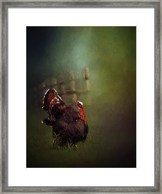 Turkey Framed Print by David and Carol Kelly