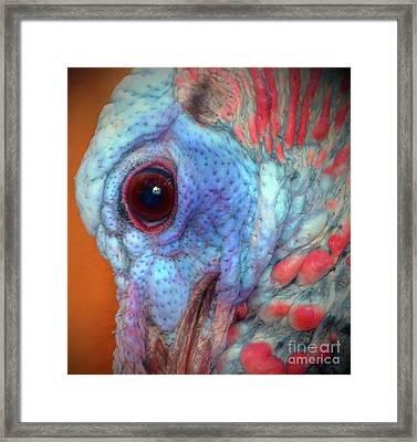 Turkey Head Shot Framed Print by Kim Pate