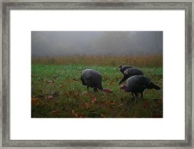 Turkey On A Foggy Morning Framed Print by James Jones