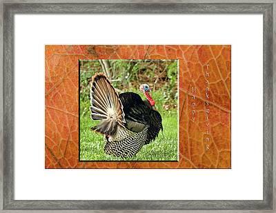 Turkey Strut Framed Print by Geraldine Scull