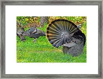 Turkey Tails Framed Print by Geraldine Scull