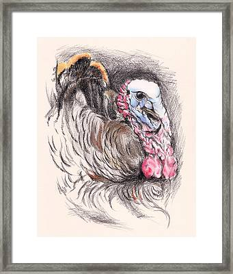Turkey Tom Framed Print by MM Anderson