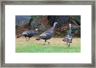 Turkey Trio Framed Print