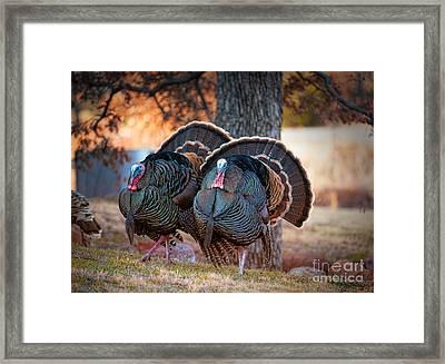 Turkey Trot Framed Print