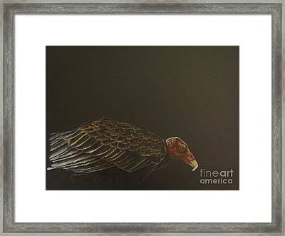 Turkey Vulture Framed Print by Laurianna Taylor