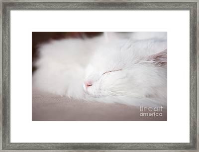 Turkish Angora Cat Face Closeup Framed Print by Arletta Cwalina