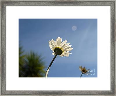 Turn To The Light Framed Print
