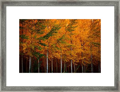 Framed Print featuring the photograph Turning Into Gold by Dan Mihai