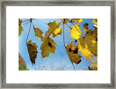 Turning Over A New Leaf Framed Print by Bill Cannon