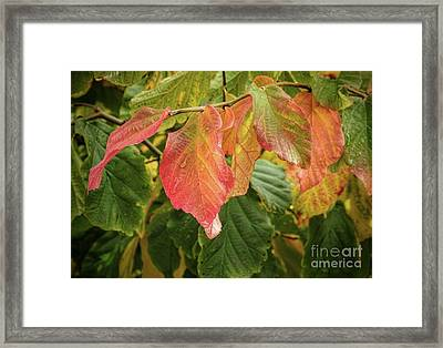 Framed Print featuring the photograph Turning by Peggy Hughes