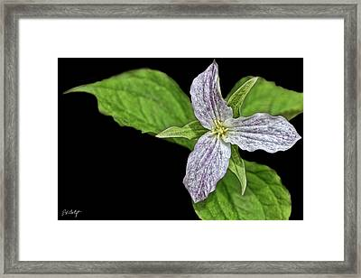 Once Was White Framed Print
