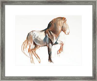 Turning Przewalski Framed Print by Mark Adlington