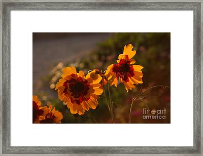 Turning Their Blossom Bottoms To The Setting Sun Framed Print by Brian Boyle