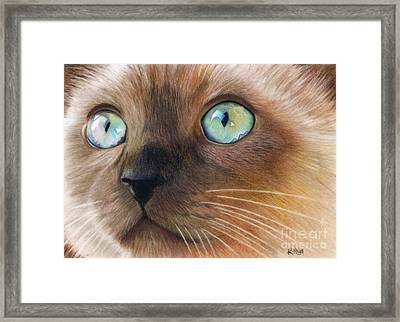 Turquoise Eyes Framed Print