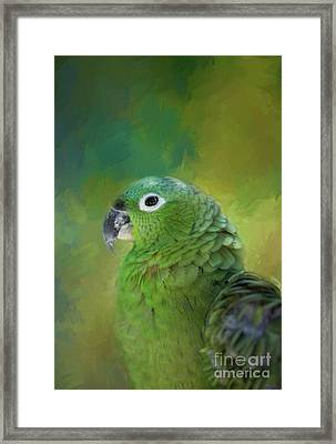 Turquoise-fronted Amazon Framed Print