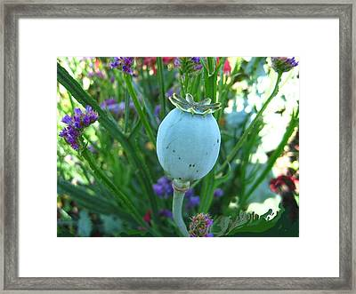Turquoise Gem Framed Print by Shirley Sirois
