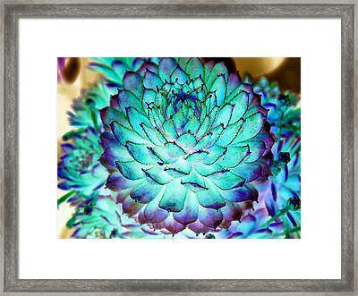 Framed Print featuring the photograph Turquoise Succulent 2 by Marianne Dow