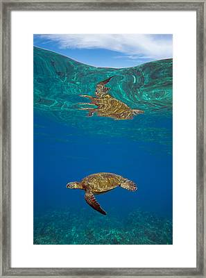 Turtle And Sky Framed Print