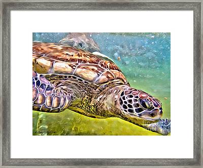 Turtle Dive Framed Print by Carey Chen