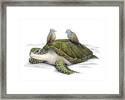 Turtle Doves Framed Print by Don McMahon