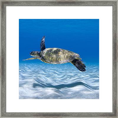 Turtle Flight -  Part 2 Of 3  Framed Print