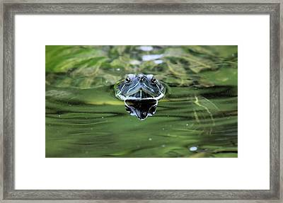 Turtle Head Framed Print by Karol Livote