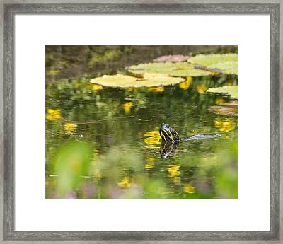 Framed Print featuring the photograph Turtle  by Julie Andel