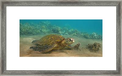 Turtle Magic Framed Print by Brian Governale