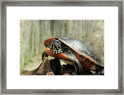 Turtle Neck Framed Print