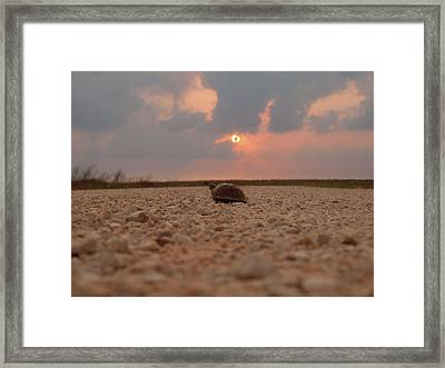 Turtle Of The Apocolypse Framed Print