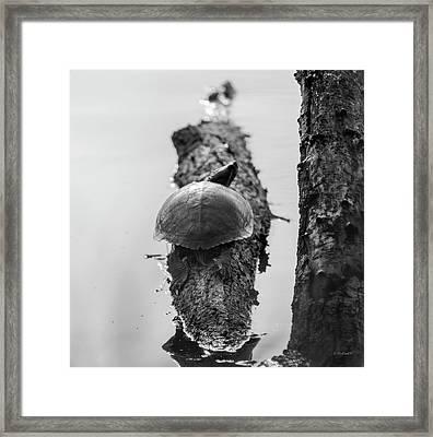 Turtle On A Log - Bw Framed Print