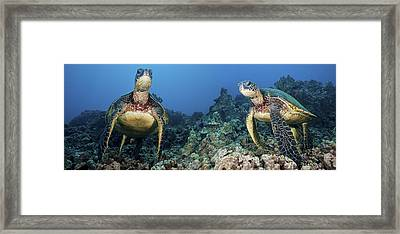 Turtle Panorama Framed Print by Dave Fleetham - Printscapes