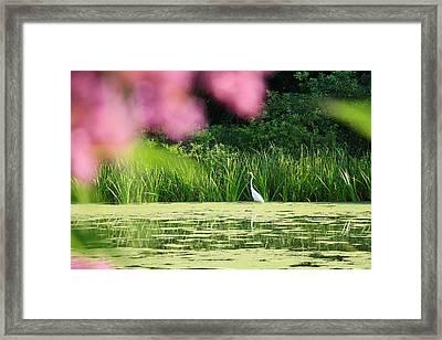 Turtle Pond Tune Framed Print by Iryna Burkova Goodall