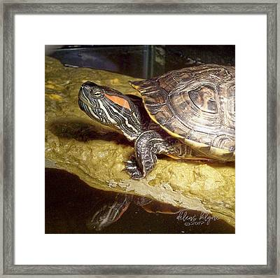 Framed Print featuring the digital art Turtle Reflections by Deleas Kilgore