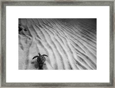 Turtle Ridge Framed Print by Sean Davey