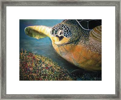 Turtle Run Framed Print