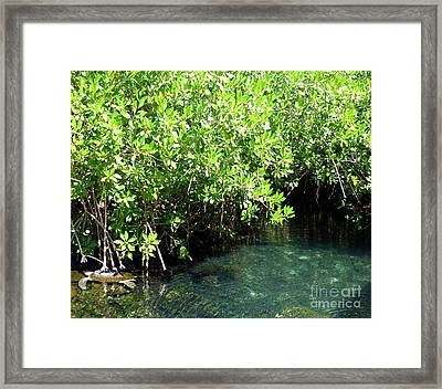 Framed Print featuring the photograph Turtle Swim by Francesca Mackenney