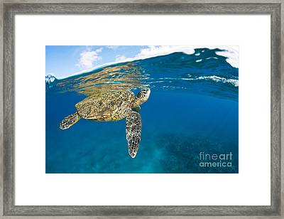 Turtle Taking A Breath Framed Print by Dave Fleetham - Printscapes