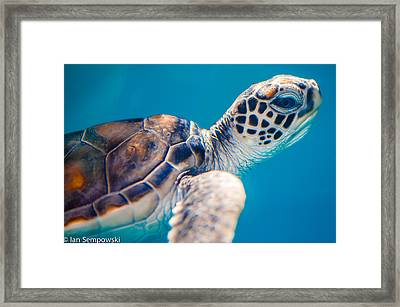 Turtle Town Framed Print
